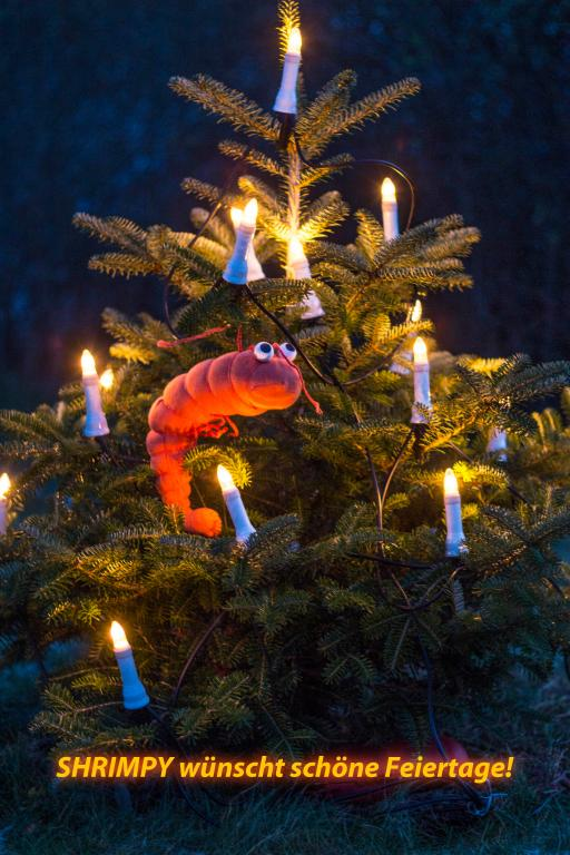 shrimpy christmas.jpg